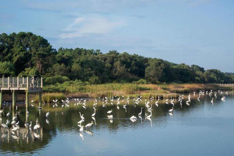 Mullet Pond, Huntington Beach State Park, South Carolina