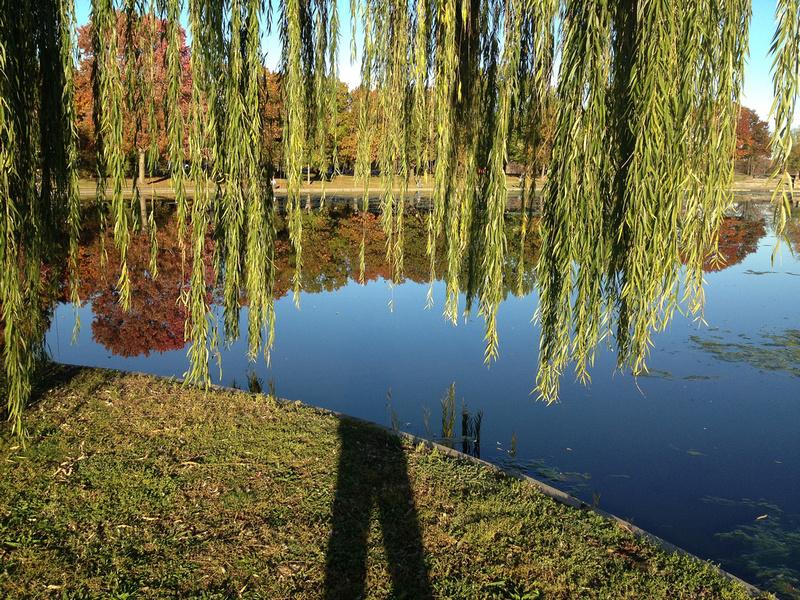 Constitution Gardens Ponds, Washington DC