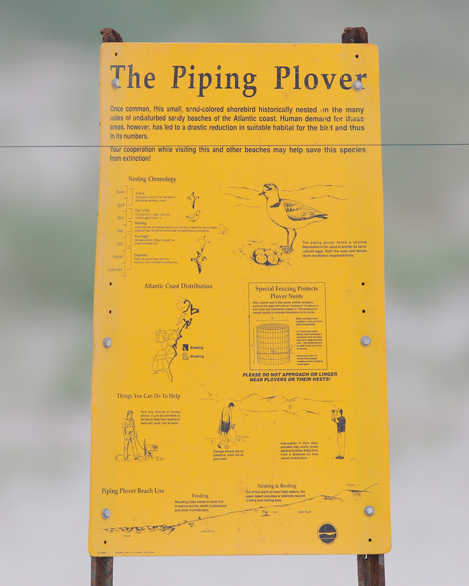 Piping Plover sign, Nickerson Beach